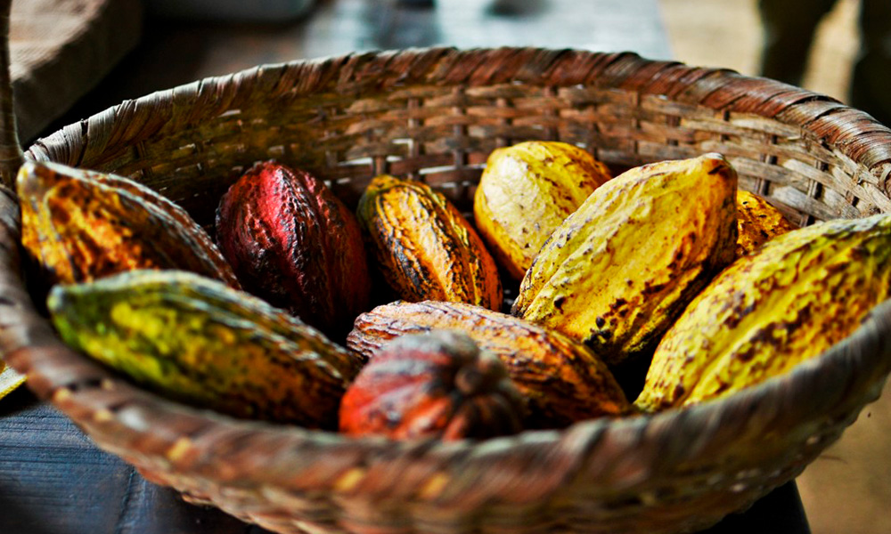 Historia del cacao