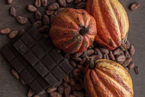 Cacao forastero